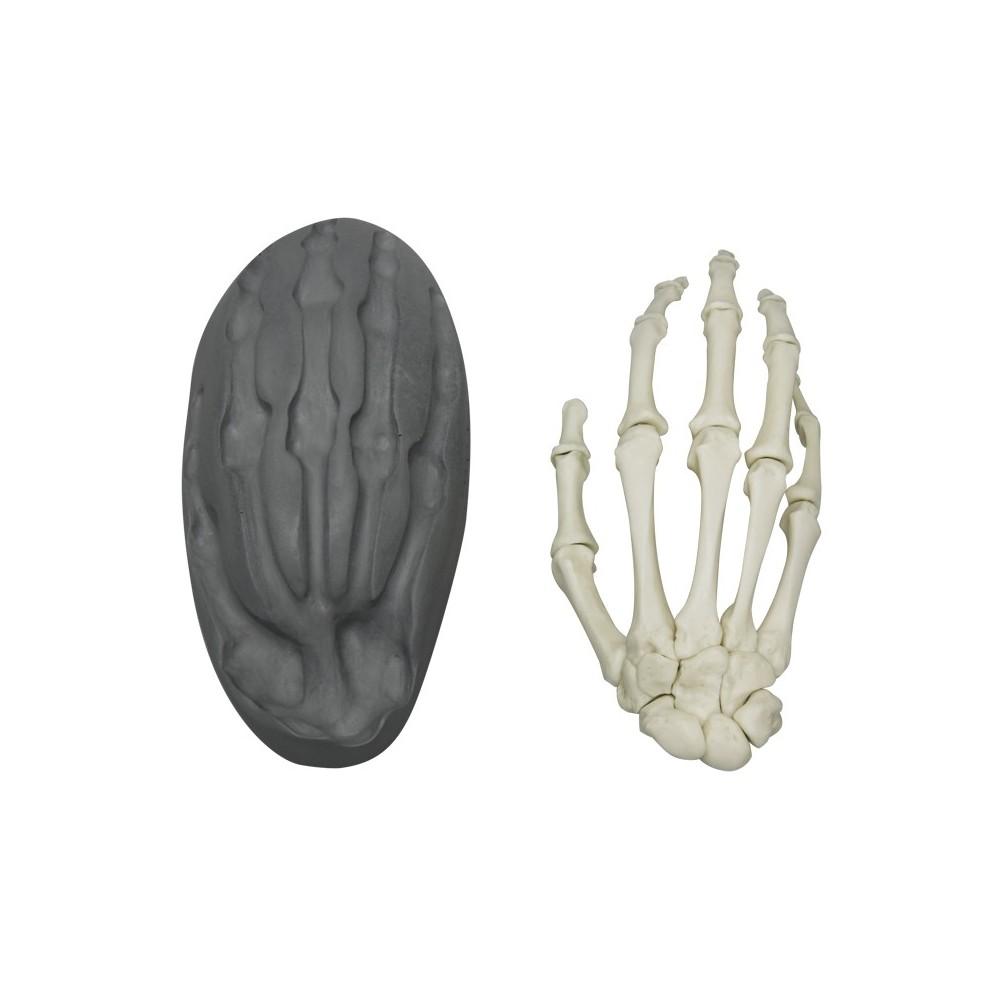 Magnetische menschliche Skelett-Hand, rechts