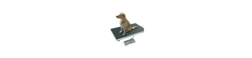 Balances vétérinaires et balances pour animaux à usage professionnel.